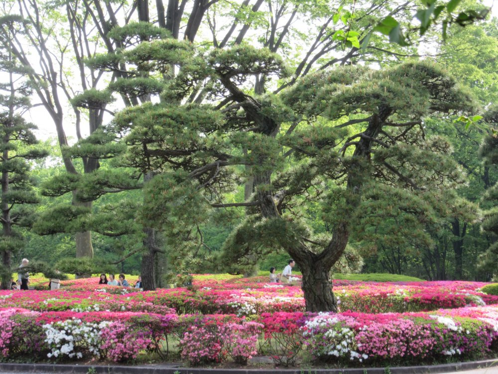 The Imperial Palace East Gardens