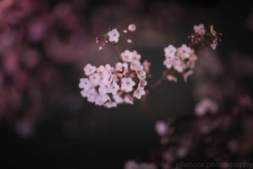 A pretty close up of the blossoms