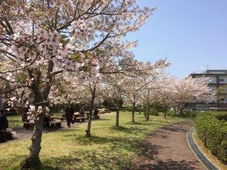 Gedung kampus Universitas Yamaguchi