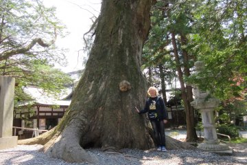 Powerful Trees of Japan