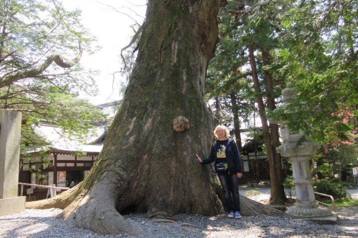 Powerful Trees of Japan