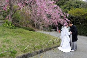 ทั่วทั้งสวนมีทัศนียภาพที่งดงาม เหมาะแก่การถ่ายภาพพรีเวดดิ้ง (Pre Wedding)