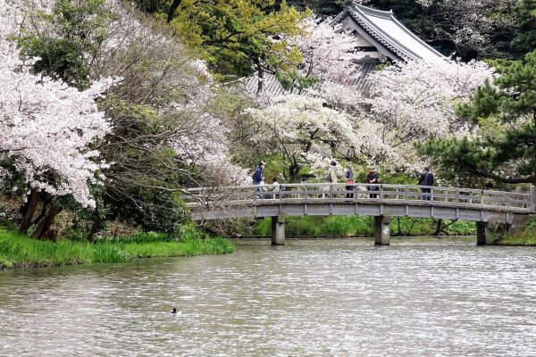 ฉันมีโอกาสได้ไปชมสวนในต้นเดือนเมษายน ต้นซากุระหลายสิบต้นของสวนกำลังเบ่งบานกันอย่างตระการตา