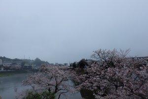 ซากุระช่วยขับเน้นให้สะพานสวยงาม