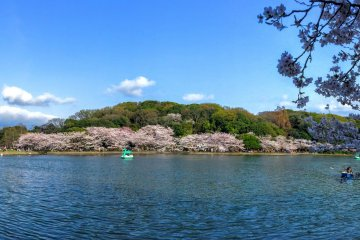 Akashi Castle Park in Full Bloom