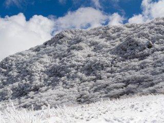 Fresh snowfall on the mountainside