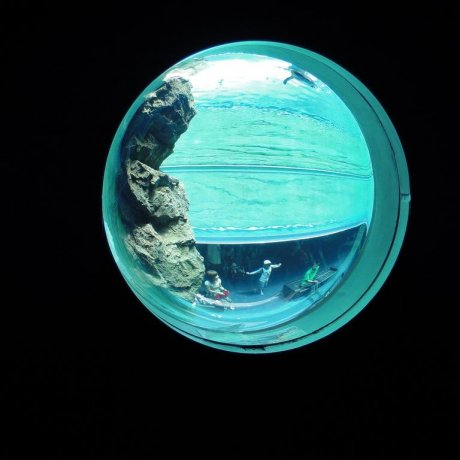 Aquas Aquarium