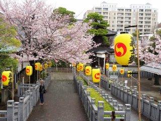 ดอกไม้สีชมพูและโคมไฟสีเหลือง ตกแต่งประดับประดาทางเข้าสุสานอย่างงดงาม