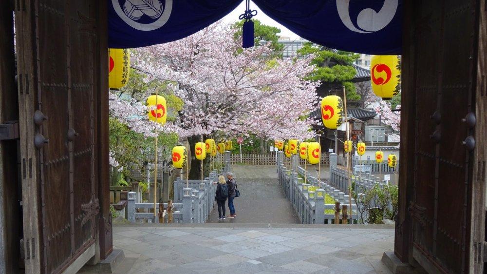 มองจากประตูสุสานลงไปยังทางเดินซากุระ