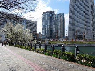 บนเส้นทางเดิน คิชะมิชิ