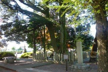 Под этим деревом похоронены головы сотен западных самураев