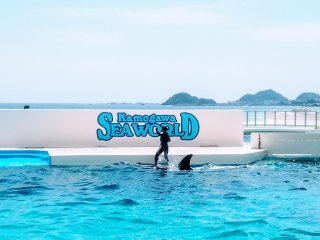Surfing on a killer whale, only at Sea World