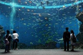 Menjelajah Kamogawa Sea World
