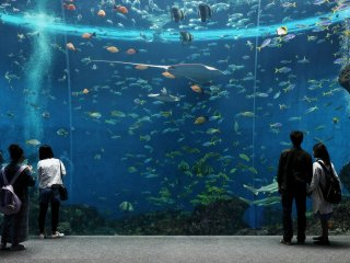 The huge aquarium full of marine life is highly relaxing