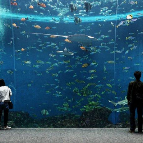 Kamogawa Sea World Adventure