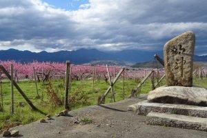 สวนพีชในเอ็นซาน (Enzan)