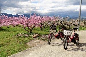ปั่นจักรยานเที่ยวสวนเป็นการท่องเที่ยวสีเขียวจริงๆ