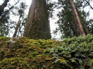 เพียงแค่ใช้เวลา ก้าวเท้าเดินอย่างช้าๆ สูดอากาศพลังเขียวที่มีอยู่มากมายรอบตัวคุณ