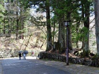 ถนนซุกินะมิ (Suginami) ถนนต้นสนโบราณแห่งเมืองมรดกโลกนิกโกะ ทอดตัวไปสู่ศาลเจ้าโทะโชะกุ