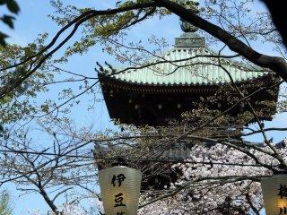 ชมวิวอันงดงามของเจดีย์ Kan'ei-ji เจดีย์โบราณที่ตั้งอยู่ในสวนสัตว์อุเอะโนะ