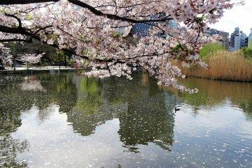 สระ Shinobazu แห่งสวนอุเอะโนะ