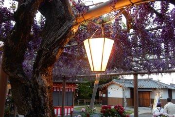 Mandala Temple Wisteria Festival