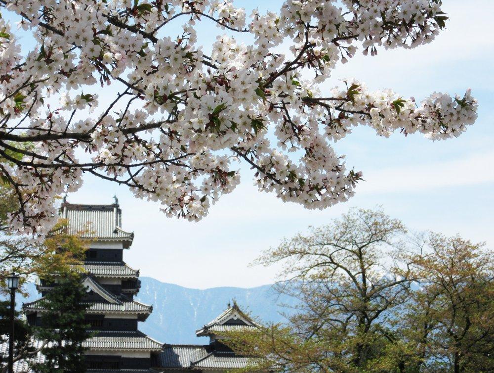Вид замка с сакурой и горами