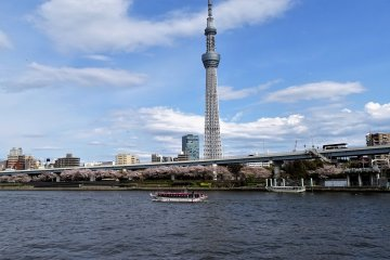 ฮานามิริมแม่น้ำสุมิดะ