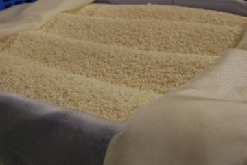 Rice turning into koji during the fermenting process at Nabedana