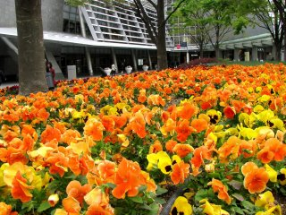 Beautiful flower beds around the rest zone