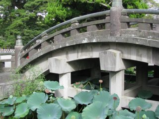 Stone bridge and lotus garden