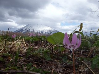 Spring has arrived in Niseko
