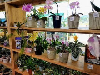 Exotic orchids section