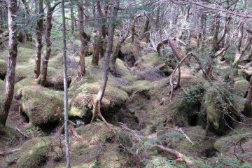 Shirakoma Pond Moss