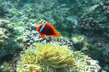 Miyakojima: A Diver's Paradise