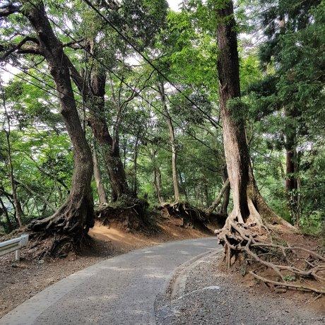 ภูเขาทะคะโอะ (Mt. Takao)