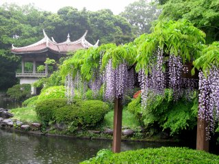 В дождь сад особенно красив и безлюден