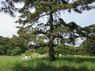 Станция Йойоги. Большой парк для прогулок и пикников
