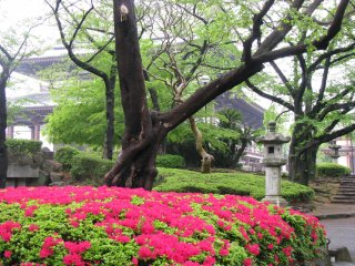 Сад вокруг храма