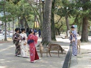 Девушки в юката и олени