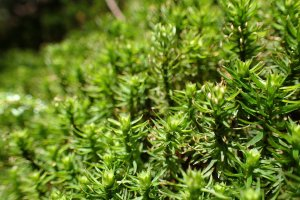 Moss - detail