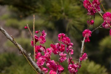 <p>The dark-pink and green combination was my favorite</p>