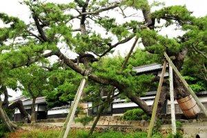 Les résidences des samouraïs dans la ville de Matsue