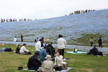 После пикников японцы не оставляют мусор за собой!