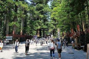ทางเดินต้นสนมุ่งตรงสู่ศาลเจ้าโทะโชะกุ (Tosho-gu)