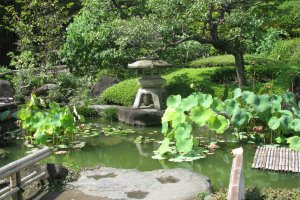 Уголок японского сада