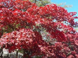 Une arbre rouge