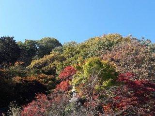 Le Koyo à Nikko