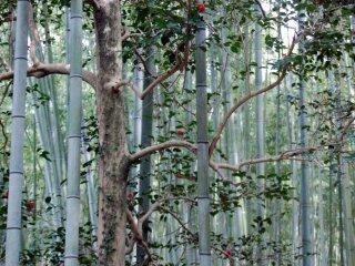 Khu rừng trải rộng 16 km vuông