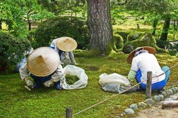 <p>큰 모자로 햇빛을 피하며 이끼 틈에서 잡초를 공들여 뽑고 있는 여인들</p>